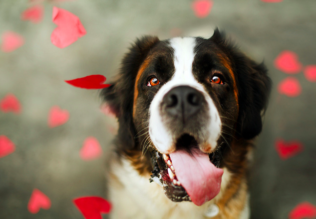 09-dog-loves-you-dogvacay
