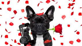selfie-del-perro-de-las-tarjetas-del-da-de-san-valentn-en-amor-84176577