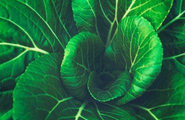 alcance orgánico